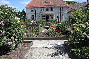 Wij trädgårdar. Bild tagen under rosdagarna.