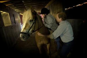 Under eget tak. Familjen har byggt till en stallbyggnad med boxar åt hästarna där de kan stå torrt och ombonat. På bilden får Anette Andersson en hjälpande hand av Yngve Thorné med att sitta upp på Vilma. Foto:Karin Rickardsson
