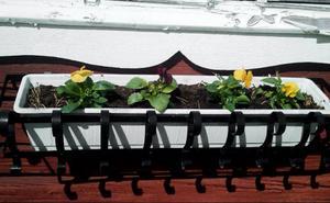 Så här vackert och somrigt blev det när Gösta tillsammans med dottern planterat Penséer utanför huset i Svenstavik ...