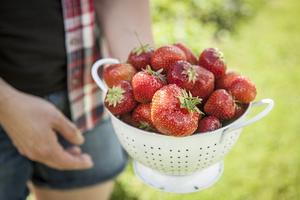 Härjeåsjöns lantgård odlar olika sorters ekologiska jordgubbar: Polka, Pegasus, Salsa och Honey.
