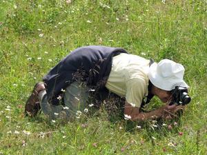 Området är gynnsamt för ovanliga fjärilssorter bland annat då växterna i dikena får växa orörda fram till sensommaren. FOTO: Göran Sjöberg