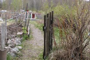 Anna Norling, som ansvarar över lotterna från kommunens sida, anser att en förening borde bildas. Men idén har inte gått hem hos de som arrenderar odlingsytorna.