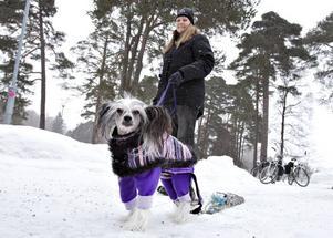 Bosse är en kinesisk nakenhund. Han väger 4,8 kilo. Han är EM-mästare i weight pulling. Lördag 26 februari ska Bosse och Sonja Engberg och visa upp sporten för allmänheten under evenemanget Vinterfestivalen i Boulognern.