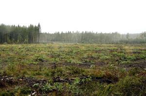 Frågetecken. Vad det 2,4 hektar stora kalhygget i norra industriområdet ska användas till är ett frågetecken. Marken är till salu. Diskussioner pågår, men det finns ingen het spekulant i dag.  BILD: INGVAR SVENSSON