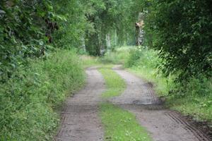 Gamla landsvägen utanför Edsbyn slingrar efter Voxna älv i en vacker allémiljö och jordbruksbygd.