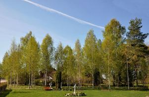 Den allra vackraste tiden på året, björkarna står i sin skira grönska.Ett flygplan har nyligen passerat och ritat ett vitt streck högt däruppe.