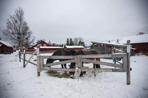 Tilde och Vilde bor bägge på Jamtli.