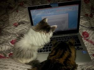 Behövde lite hjälp inför tentan,dessa två aspiranter ställde gärna upp.