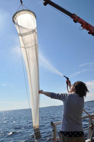 Här arbetar forskarna med provtagning av plankton.