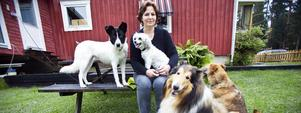 Barbro Larsson med hundarna Silena, Bullen, Chester och Andra.