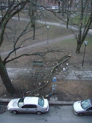 Trädfällning i Oskarsparken under stormen i går kväll.