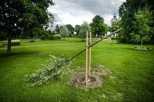 Skadegörelsen i Schenströmsparken har anmälts till polisen.