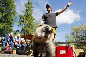 Jägarförbundets Magnus Hansson fanns på plats för att informera om fågelholkar, men de den uppstoppade mårdhund han hade med sig gjorde att det ändå slutade med att han pratade mer om förbundets mårdhundsprojekt.