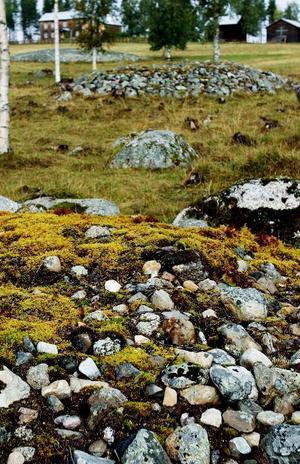 Stenrösena vittnar om nybyggarnas kamp för att göra vildmarken odlingsbar.