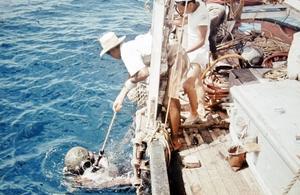 Iklädd tungdykardräkt sänks Kent Sjögren ned i havet på jakt efter nya pärlemorskal.