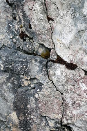 Den spännande stenen och geologin i Siljansringen ger svar och ställer nya frågor till dagens människor.