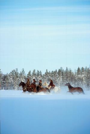 På hästryggen kommer man nära naturen.