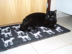 Den här mattan passar mig utmärkt